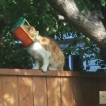 Butterscotch, cat with bug trap stuck on head, is finally rescued