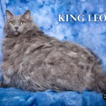 King Leo: 30 Pound Matted Cat Gets Help