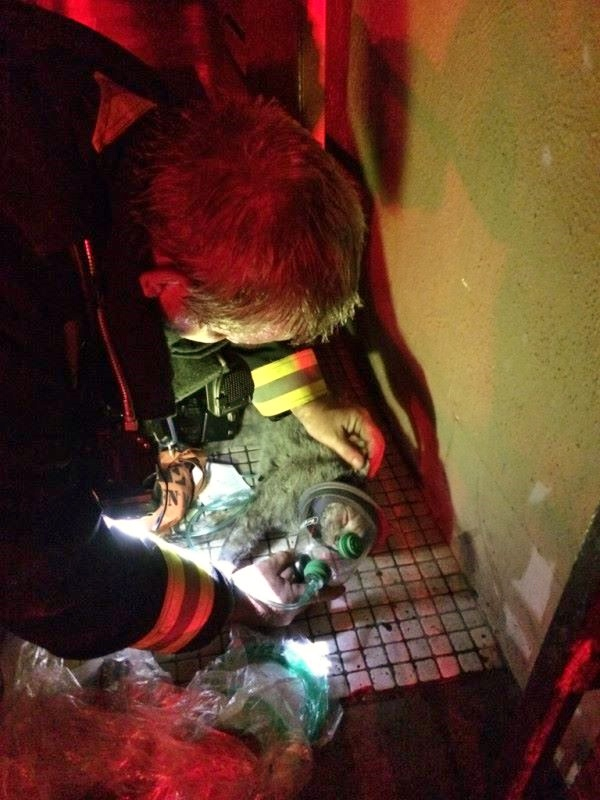 Boston Firefighters Rescue And Revive 2 Cats At House Fire