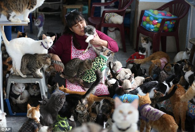 Hospice for Cats