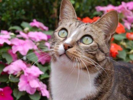 Joey the Garden Cat, RIP