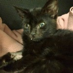 Abused Kitten Hope is Saved from Heroin Overdose by Quick Thinking Vets