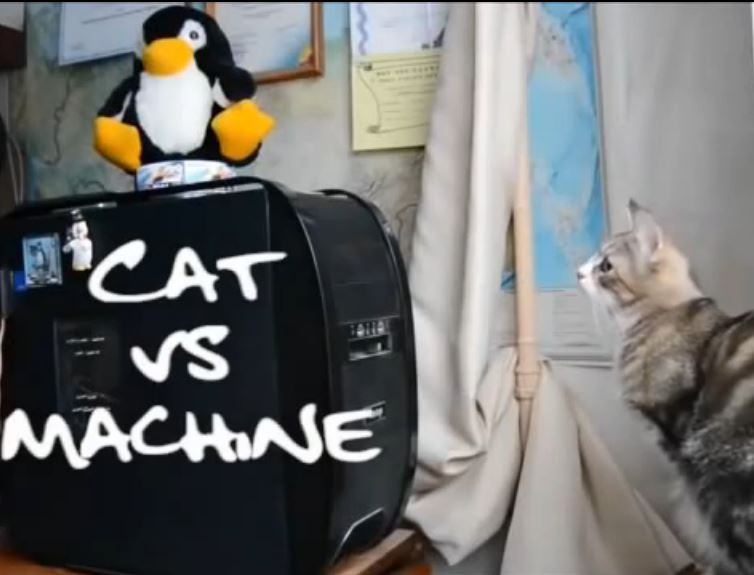 Cats vs the Machines