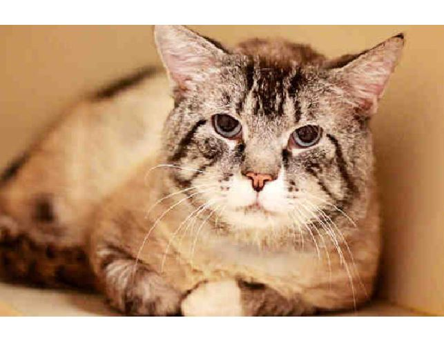 Lazarus, Cat Trapped Behind Wall Cheats Death and Lives!