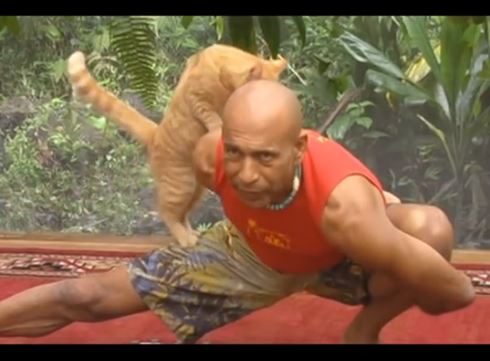 Yoga Lesson with Cat
