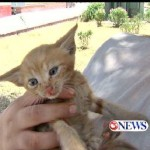 Good Samaritans Rescue Kitten Trapped for a Week in Ditch