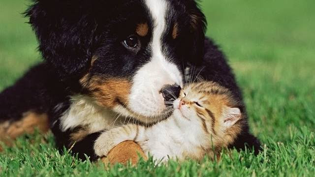 Cuteness Alert! Sweet Dogs Playing with Kittens