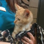 Update on Trucker's Recovery: Kitten who lost leg when thrown from car heals