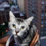 Cat Survives 9 Story Fall from NYC Penthouse Apartment