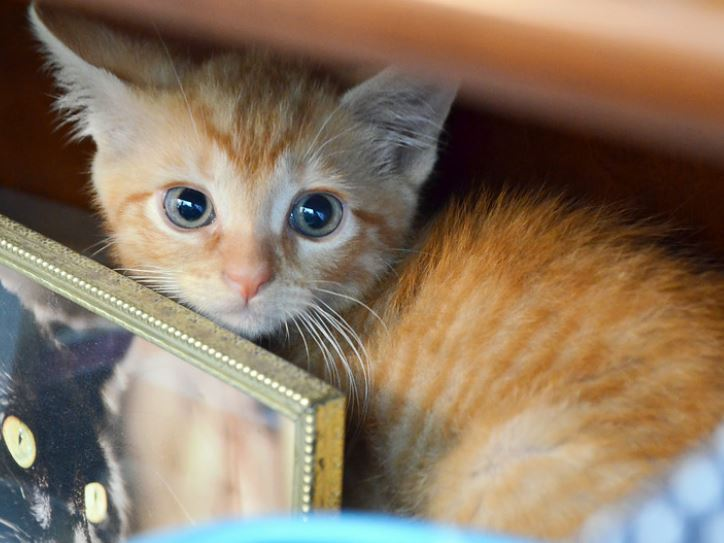Kitten Born to Abandoned Cat Highlights Need for Legislation to Pass