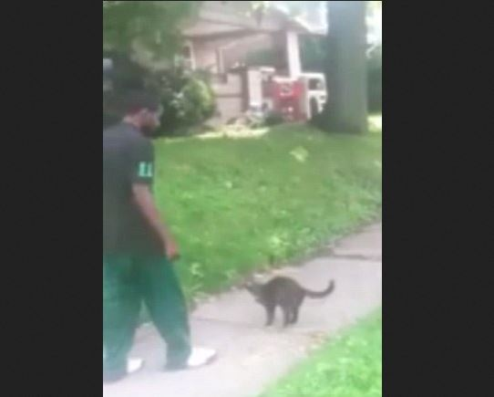 Akron Cat Kicker Skips Out on Sentencing Hearing: Warrant Issued
