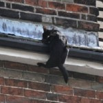 Firefighters Rescue Black Cat Clinging to Edge of Roof