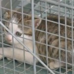 Kittens Abandoned at Fire Station Get Help