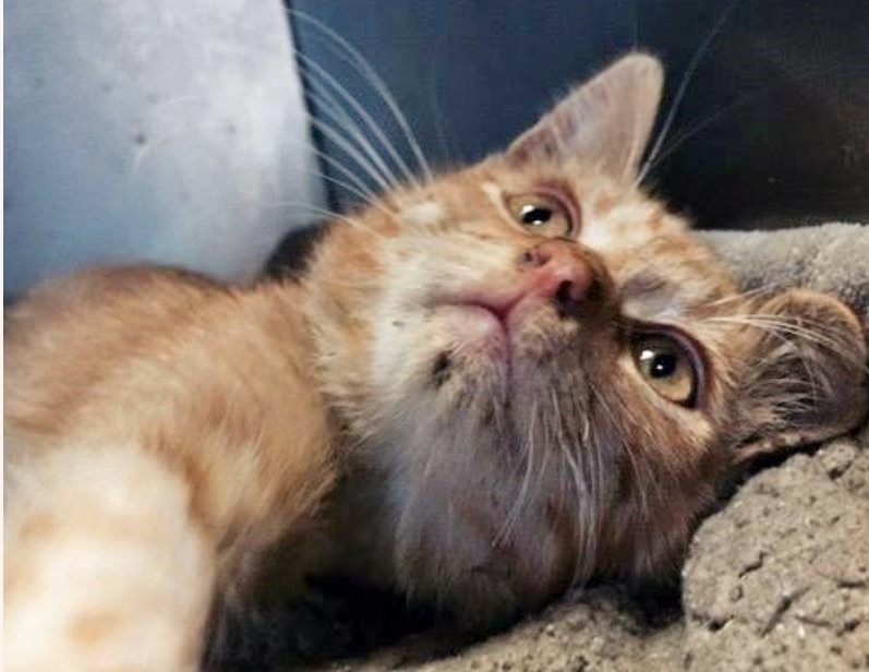 Trucker – Kitten who lost leg when thrown from car – continues his recovery