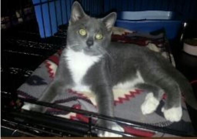 Kitty Thrown From Car Now Thriving