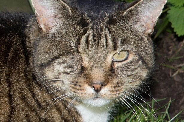 Nelson One Eyed Cat With Incredible Story Is Cat Of The