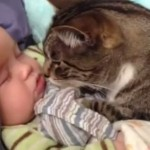 Cats and babies are best friend