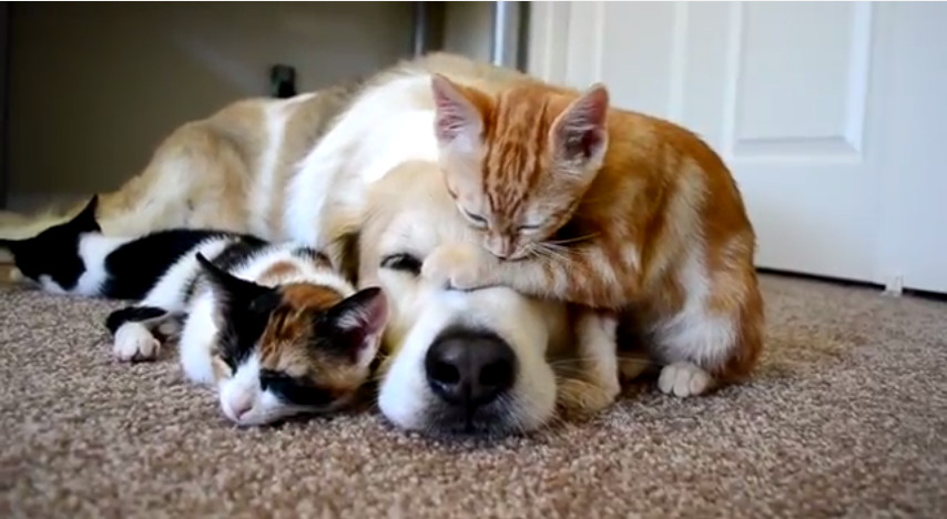These two kittens are sleeping next to the dog. Too cute!