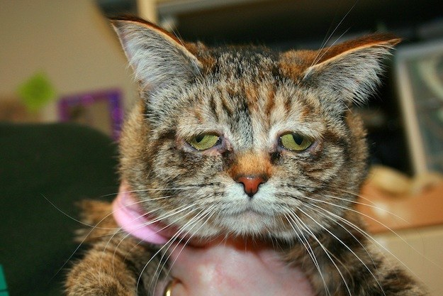 So-Called Saddest Cat Tucker Finds a Home