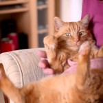 Mr Chips: Pet Therapy Cat Wins Award