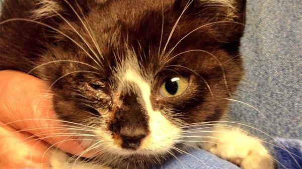 pet+savers+kitten+8.15.4