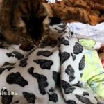 Cat lulling a baby
