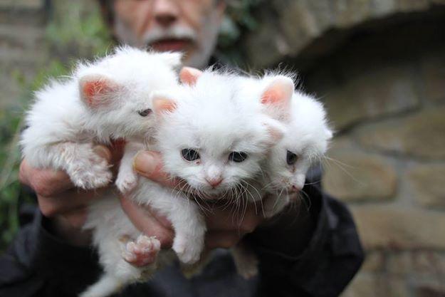 Abandoned Kittens Get a Lifeline