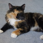 Aria's story: Cat missing for 10 months is reunited with her family
