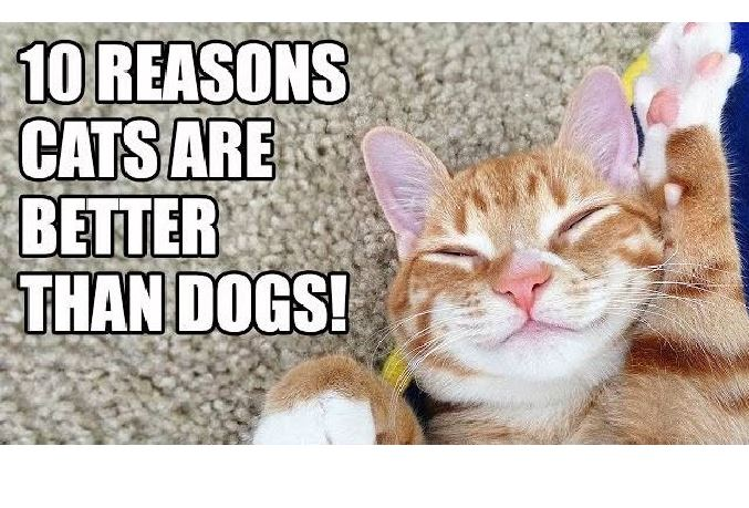 why cats are better than dogs persuasive essay Why dogs are better than cats essaysbud speaks views from a dog.