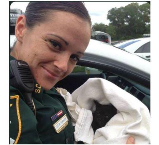 Sarasota deputy rescues kitten dodging traffic