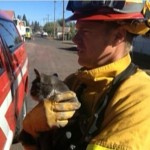 Cat is Rescued from Burning Home Amid California Wildfire