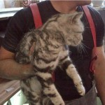 Firefighters rescue cat trapped between walls