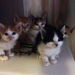Felony charges for man who caught kittens on sticky traps