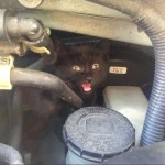 Kitten is Rescued from Car and Finds a Home