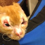 Russell Burned Kitty Update: Better and Better