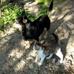 Abandoned cat rescued from the road is adopted by two dogs