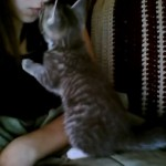 Cute kitten asks for kisses before nap