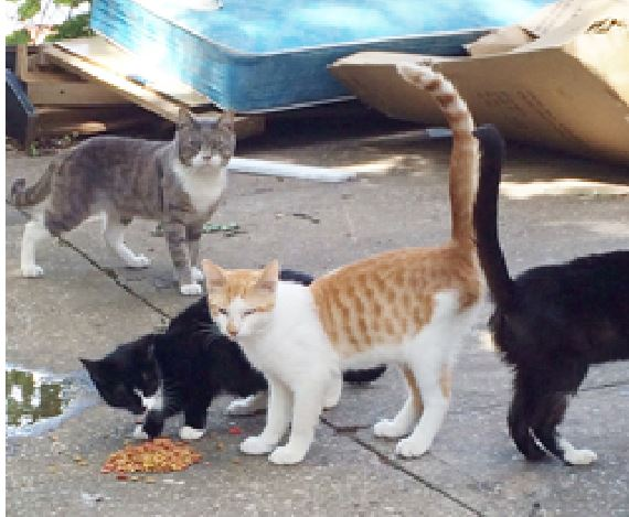 Cats found near grisly Yonkers hanging tree site are rescued and ready for homes