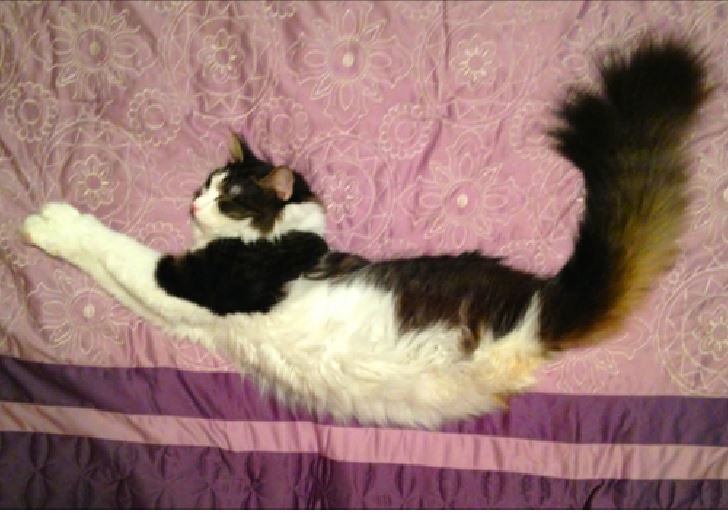 Anakin the 2 Legged Miracle Cat loves the new bedspread