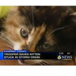 Teamwork leads to rescue of trapped kitten