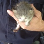 Firefighters Rescue Trapped Kitten Heard Meowing for Help