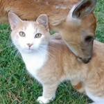 Baby Deer and Cat are Friends