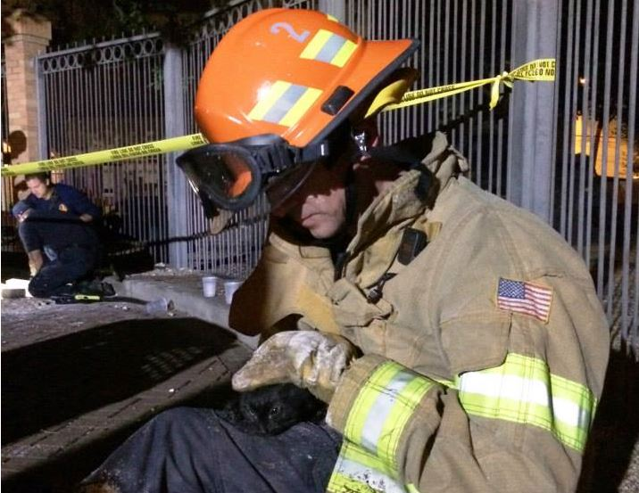 Kitten Gets Purrfect Rescue By Austin Firefighters Life