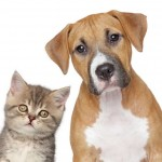 CDC Says US Cats and Dogs Not at Risk from Ebola