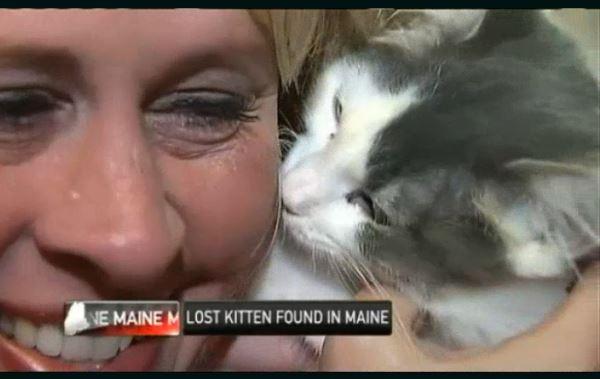 Missing Albuquerque Kitten is Found in Maine