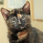Rare male tortie Harry turns up at shelter