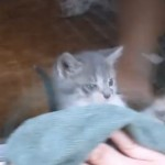 Adorable kitten freaks out over window cleaning