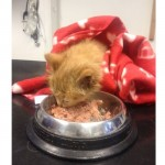 From Gollum to Ginger – A kitten's rescue
