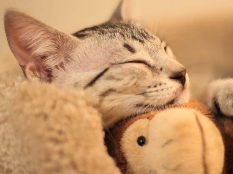 KITTEN SLEEPS EVERYWHERE