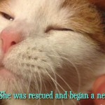 Ashley's Story: from a lab to a lap!